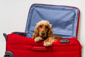 Dog in suitcase - ready to travel
